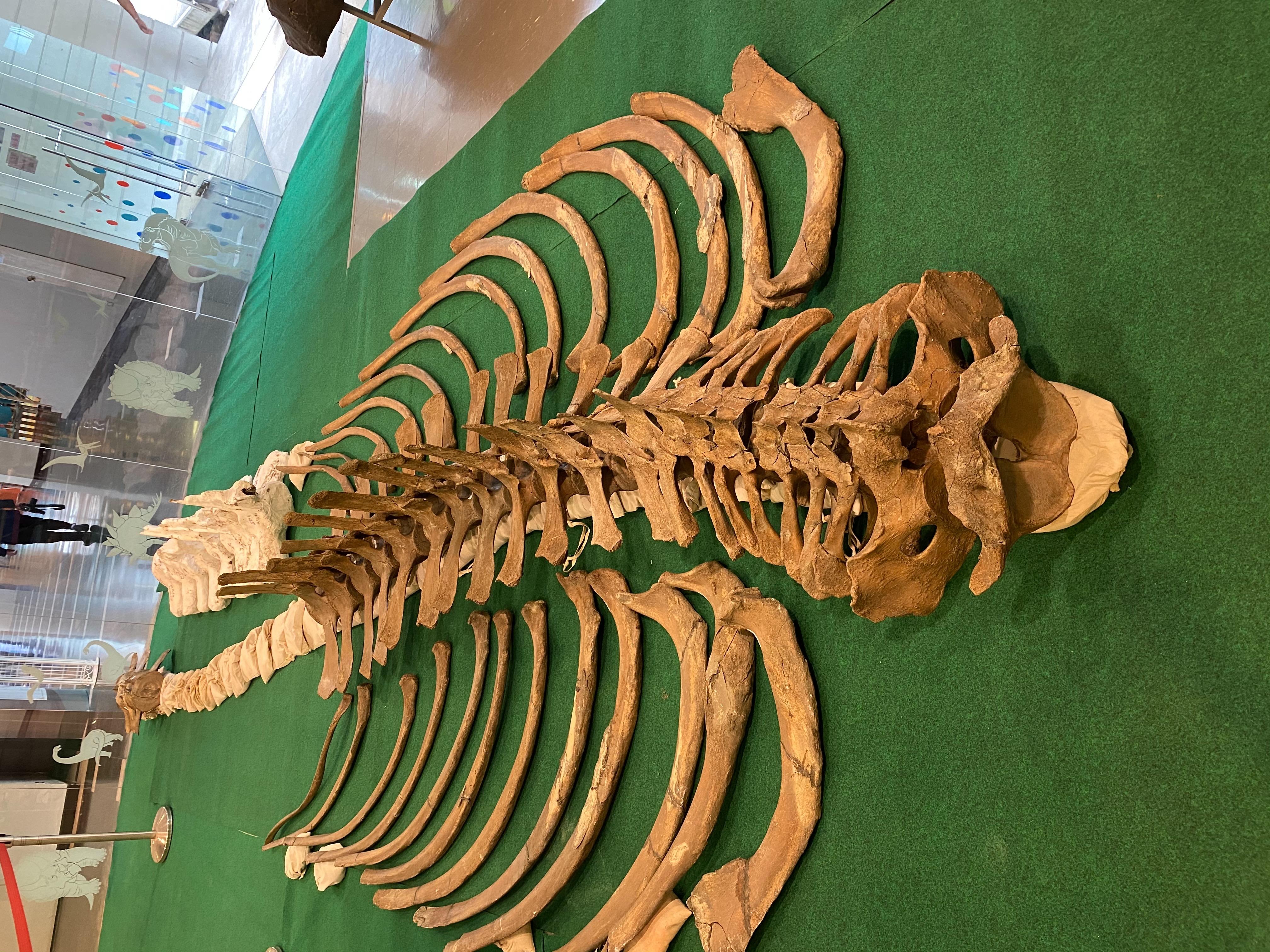 งานแถลงข่าวการอนุรักษ์และการวิจัยหาสายพันธุ์ของวาฬอำแพง
